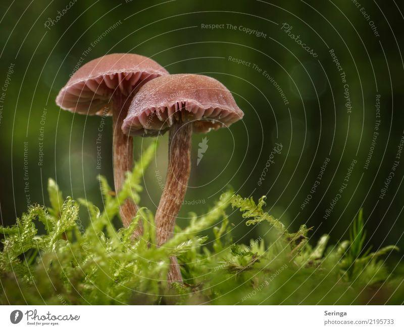 Paartanz Natur Landschaft Pflanze Tier Schönes Wetter Moos Wald glänzend genießen Wachstum wandern elegant klein nah braun mehrfarbig gelb grün orange Pilz