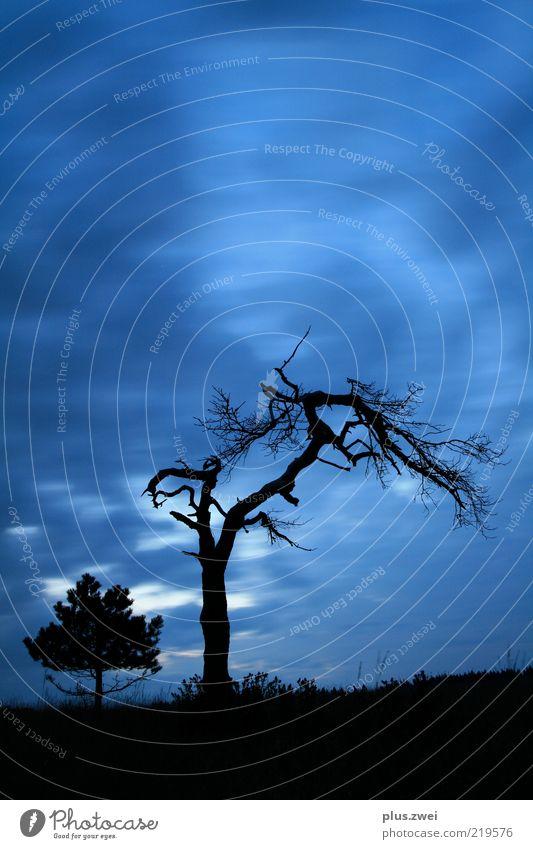 alte zeiten... Natur alt Himmel Baum blau Pflanze schwarz Wolken kalt Herbst Tod Luft Wetter Nachthimmel Vergänglichkeit fest