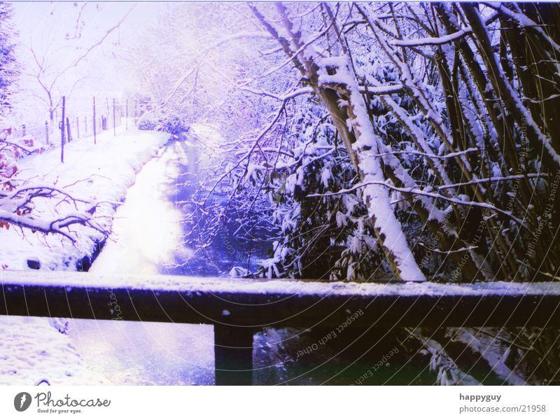 Schnee Baum kalt Geländer