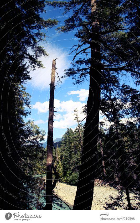 Lichtung Umwelt Natur Landschaft Erde Wasser Himmel Wolken Sommer Schönes Wetter Pflanze Baum Wald Hügel Flussufer Kanada Waldlichtung Totholz Tanne Zeder