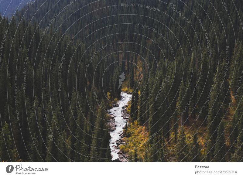 Arashan harmonisch ruhig Abenteuer Ferne Wassersport wandern Yoga Umwelt Natur Landschaft Pflanze Wald Berge u. Gebirge Schlucht Bach Fluss wild Farbfoto