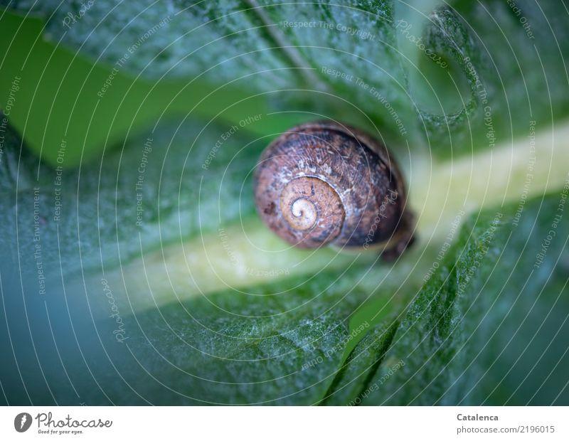 Schnecke auf Artischocke Natur Pflanze grün Tier Blatt ruhig gelb Umwelt Herbst Garten braun liegen türkis geduldig Überleben