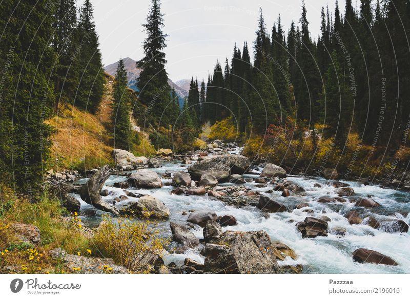 Ein Bach in Kirgistan kirgistan Kirgisistan Berge Hochgebirge Wildnis Gebirge Asien Zentralasien Gebirgsfluß Wald Bäume tian shan