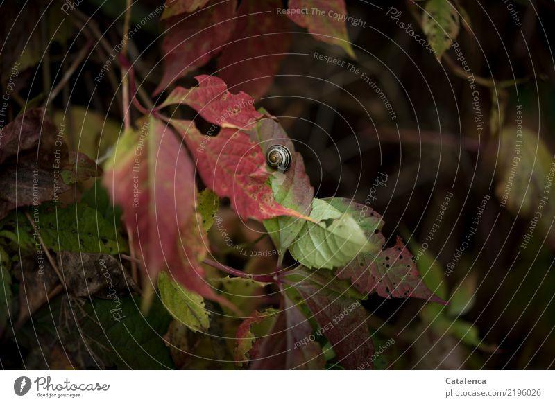 Der Herbst Natur Pflanze grün rot Tier Blatt Leben gelb Umwelt Garten braun rosa Stimmung orange ästhetisch