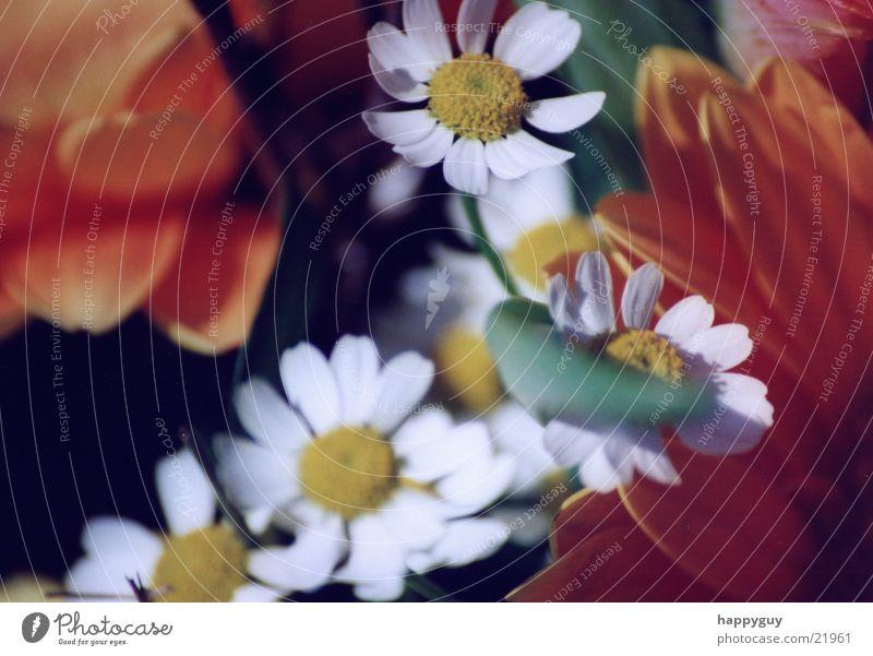 Blumen2 Frühling Pflanze Natur