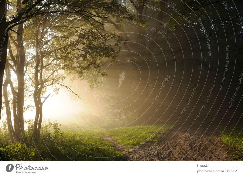Sonnenstrahlen Natur Landschaft Sonnenaufgang Sonnenuntergang Sonnenlicht Nebel Baum Wald Wege & Pfade gelb grün Stimmung ruhig Morgennebel Fußweg Farbfoto