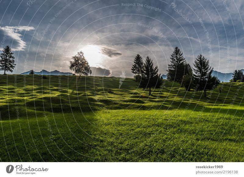 Sonnenaufgang ruhig Ferien & Urlaub & Reisen Sommerurlaub Berge u. Gebirge wandern Joggen Natur Landschaft Sonnenlicht Baum Gras Erholung gehen genießen