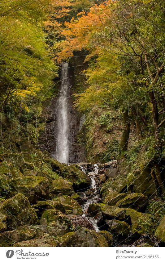Das Wasser, das am Yoro-Wasserfall in Gifu, Japan fällt schön Ferien & Urlaub & Reisen Tourismus Berge u. Gebirge Garten Natur Landschaft Herbst Baum Moos Blatt