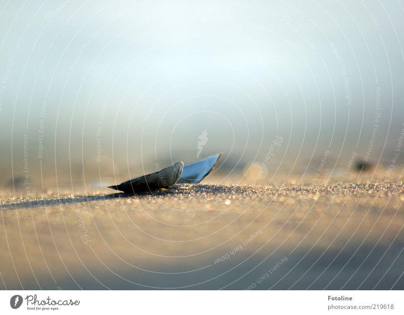 Strandgut Natur Sommer Sand hell Küste Umwelt nah natürlich trocken Muschel Tier Textfreiraum links Unschärfe Muschelschale