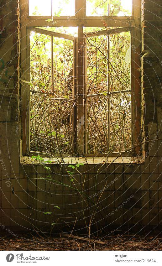 Recapturing |A Thirsty Plant alt Pflanze Sommer Haus dunkel Fenster Frühling Stein Mauer Gebäude Wachstum offen Sträucher wild natürlich
