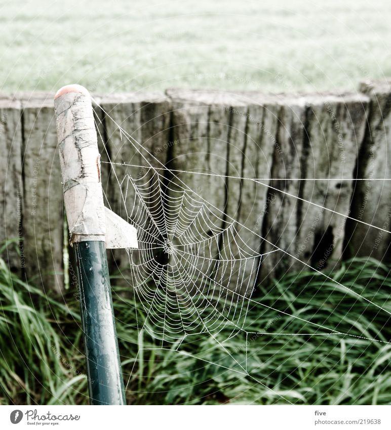 vernetzt Umwelt Natur Herbst Pflanze Gras Grünpflanze Garten Wiese frisch kalt nass zerbrechlich Holz Spinnennetz Farbfoto Außenaufnahme Morgen Morgendämmerung