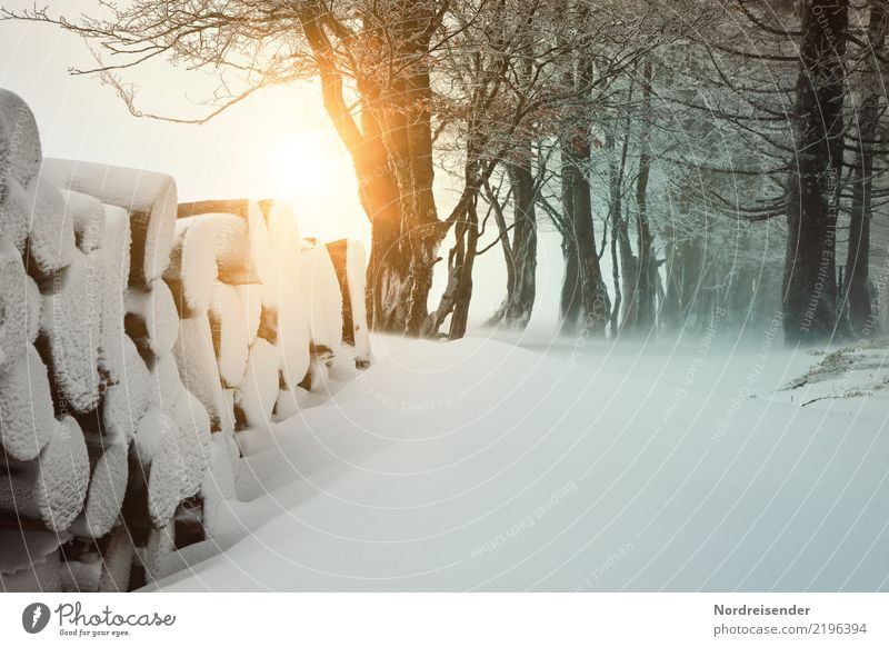 Winter im Schwarzwald Sonne Schnee Winterurlaub wandern Landwirtschaft Forstwirtschaft Natur Landschaft Urelemente Sonnenaufgang Sonnenuntergang Klima Wetter