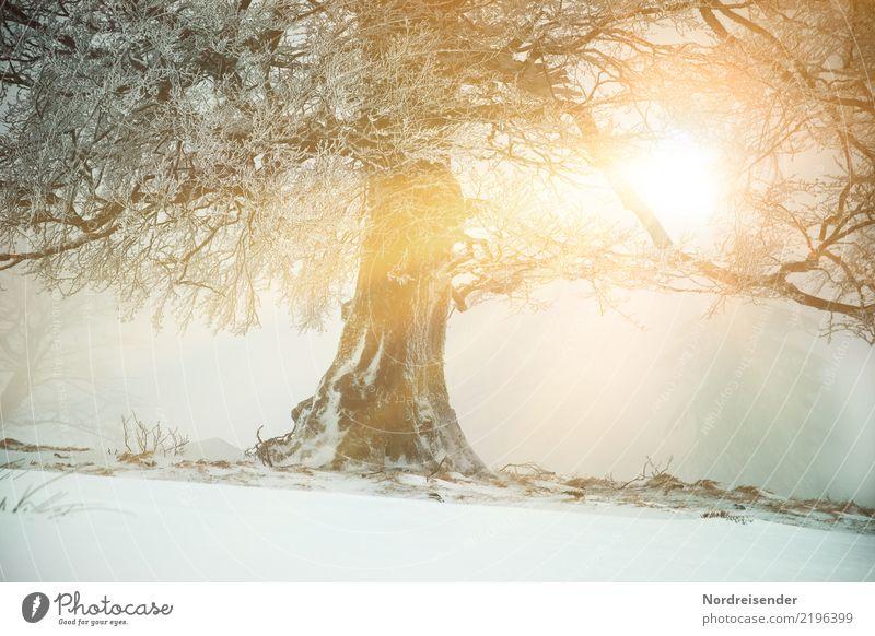 Wintersonne Schnee Winterurlaub Natur Landschaft Pflanze Urelemente Klima Wetter Eis Frost Baum Wald alt frisch nachhaltig Kraft standhaft Buche eigenwillig