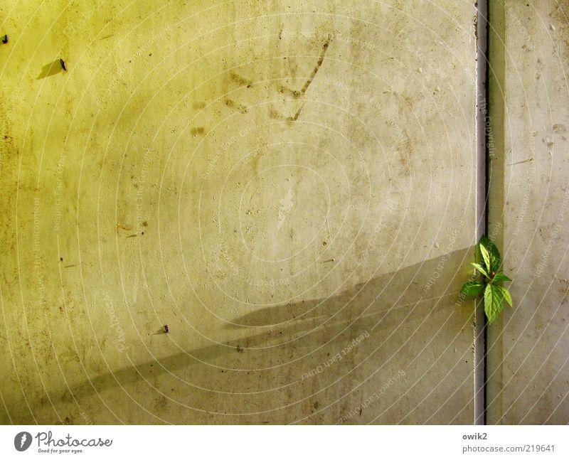 Die Kunst der Fuge Pflanze Sträucher Blatt Trieb Mauer Wand klein listig Neugier grün Mut Tatkraft Leidenschaft Sicherheit Schutz Geborgenheit Wachstum