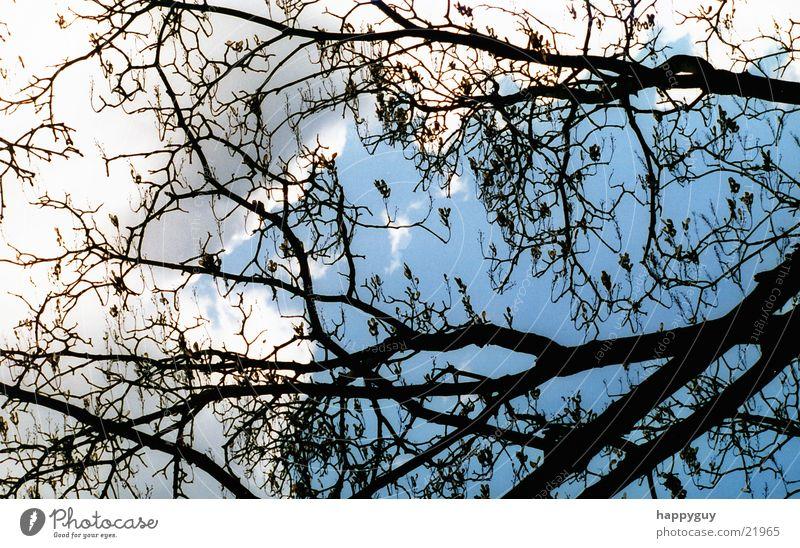 Äste Baum Ast Himmel Natur