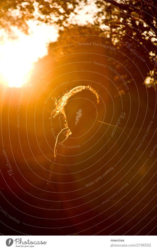 sunshine walk Mensch Sommer Sonne Erholung Wald Leben Religion & Glaube Herbst Frühling Stimmung gehen wandern Park träumen Schönes Wetter laufen