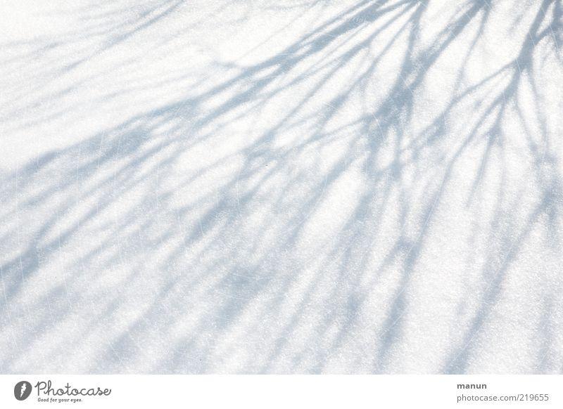 Schattendasein Natur weiß Winter kalt Schnee Eis Linie hell abstrakt frisch Frost Sträucher Ast natürlich Originalität