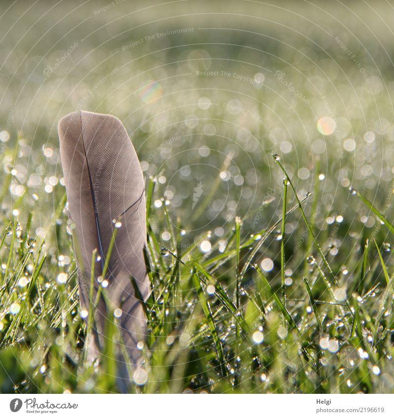 Fundsache Umwelt Natur Pflanze Wassertropfen Herbst Schönes Wetter Gras Grünpflanze Garten Feder glänzend außergewöhnlich einzigartig klein nass natürlich grau