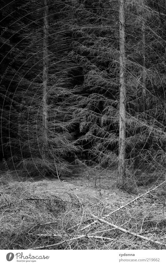 BLACK Natur Baum ruhig Einsamkeit Wald dunkel kalt Leben Tod Umwelt Traurigkeit Zeit ästhetisch Wandel & Veränderung Vergänglichkeit Ende