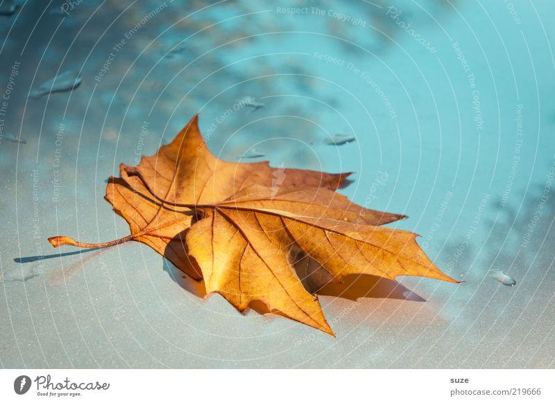Blätter, zwei Umwelt Natur Pflanze Himmel Herbst Wetter Blatt ästhetisch schön einzigartig gelb Herbstlaub herbstlich Jahreszeiten Herbstbeginn Oktober