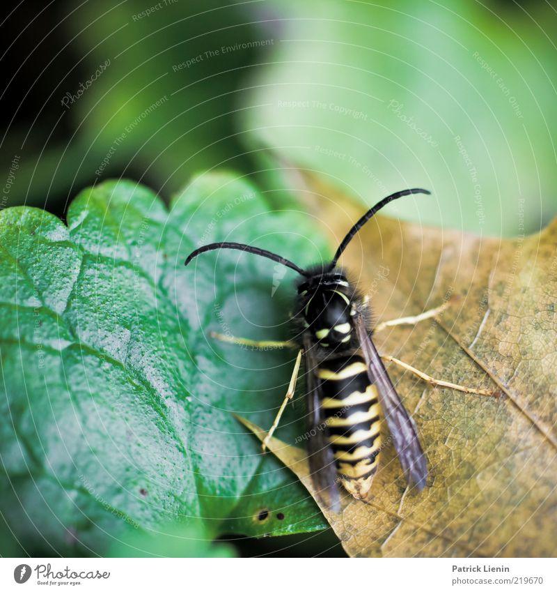 müde Natur schön Pflanze Blatt Tier Umwelt nass Flügel natürlich Wildtier Fühler Makroaufnahme Wespen