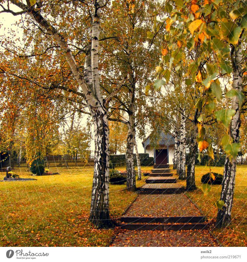 Friedhofskapelle Pflanze Blatt Gras Wege & Pfade Sträucher Wandel & Veränderung Vergänglichkeit Hügel Eingang Fußweg Grab ländlich Herbstlaub Treppenabsatz