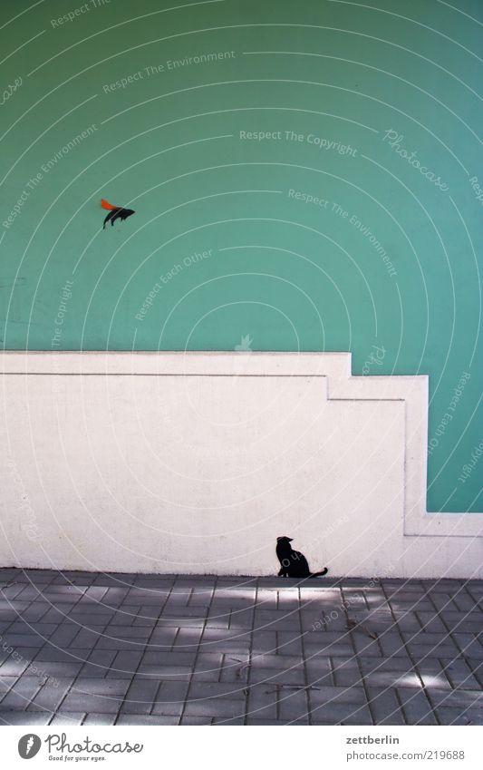 Katz und Maus Wand Mauer Katze Gebäude Vogel Kunst warten fliegen Fassade Kultur Dresden Jagd Bauwerk Flucht Maus Pflastersteine