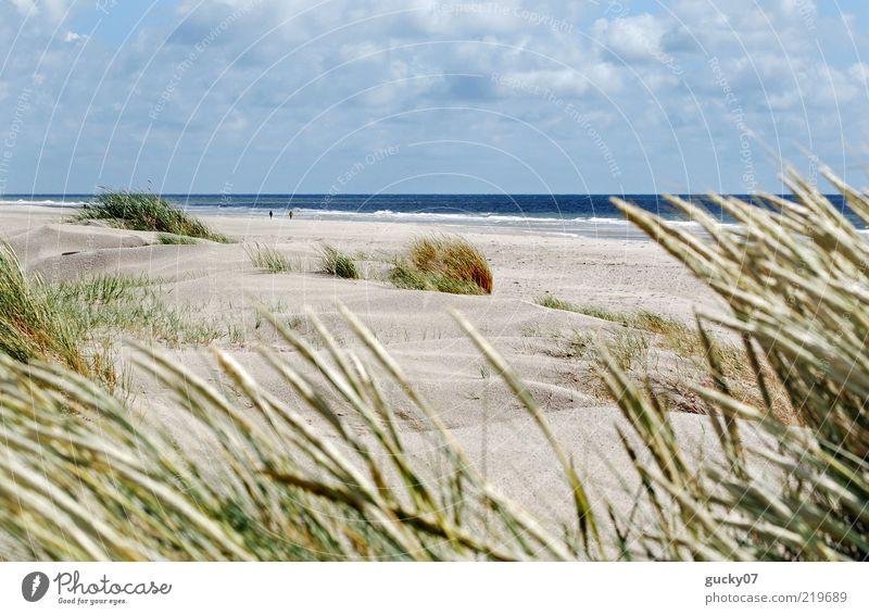 Strandläufer auf Amrum Erholung ruhig Ferien & Urlaub & Reisen Freiheit Sommerurlaub Meer Insel Landschaft Sand Wasser Horizont Schönes Wetter Strandhafer