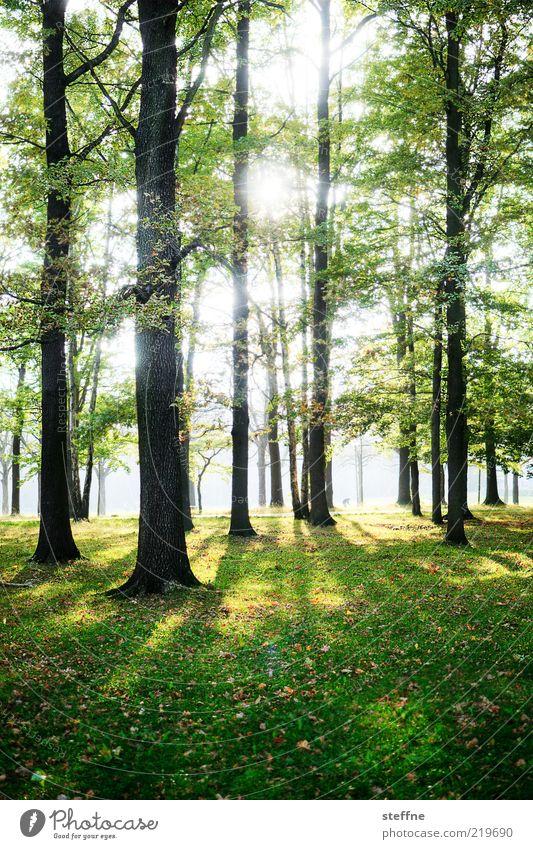 gleißend Natur schön Baum Sonne Wald Erholung Wiese Umwelt Gras natürlich Baumstamm Schönes Wetter HDR Waldboden Laubbaum Sonnenlicht