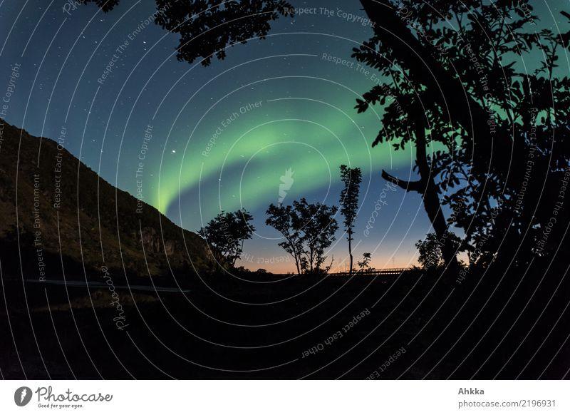 Nachthimmel, Polarlicht, Sonnenuntergang, Skandinavien Himmel Natur Baum dunkel außergewöhnlich Horizont leuchten glänzend Abenteuer fantastisch einzigartig