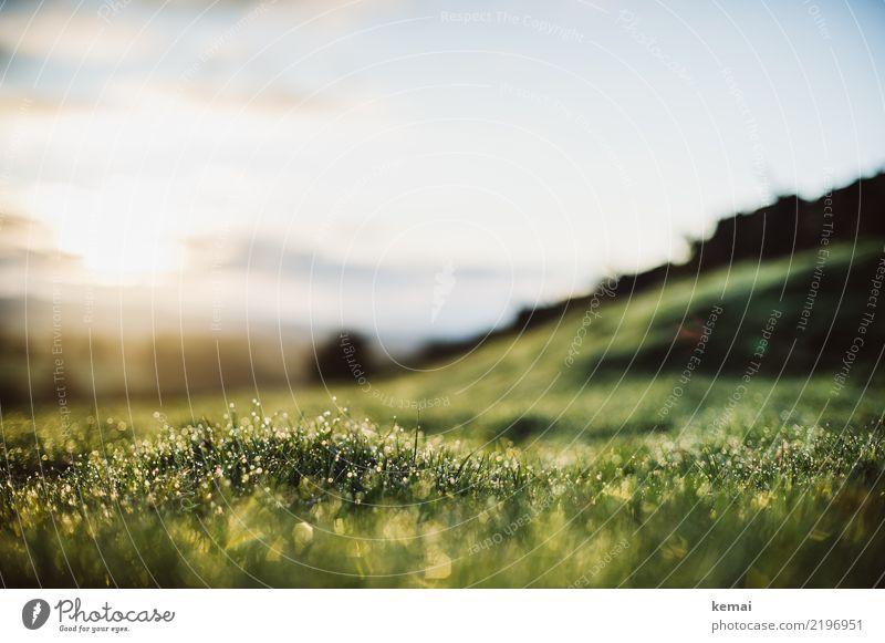 Frühtau Natur Ferien & Urlaub & Reisen Sommer Pflanze schön grün Erholung ruhig Lifestyle Leben Gras Freiheit außergewöhnlich Ausflug Zufriedenheit