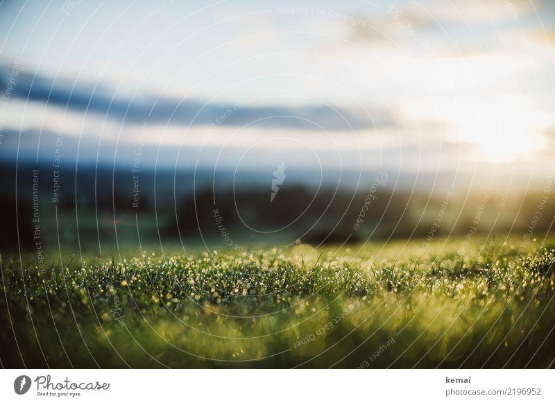 Frischer Tau Leben harmonisch Wohlgefühl Zufriedenheit Sinnesorgane Erholung ruhig Freizeit & Hobby Abenteuer Freiheit Natur Pflanze Wassertropfen Himmel Wolken