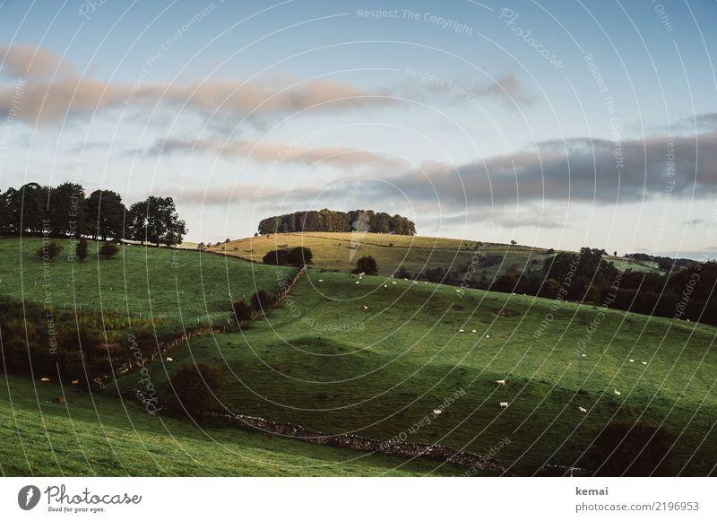 Morgendliche Idylle Himmel Natur Sommer grün Landschaft Baum Erholung Wolken ruhig Ferne Gras Mauer Freiheit Ausflug Zufriedenheit Freizeit & Hobby