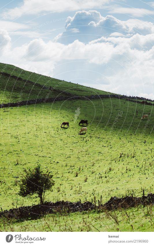 Ländlich Wohlgefühl Zufriedenheit Sinnesorgane Erholung ruhig Ausflug Ferne Natur Landschaft Himmel Wolken Sommer Schönes Wetter Baum Feld Hügel Weide England
