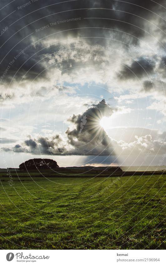 Sonnenlicht deluxe harmonisch Wohlgefühl Zufriedenheit Sinnesorgane Erholung Abenteuer Ferne Freiheit Umwelt Natur Landschaft Himmel Wolken Sommer