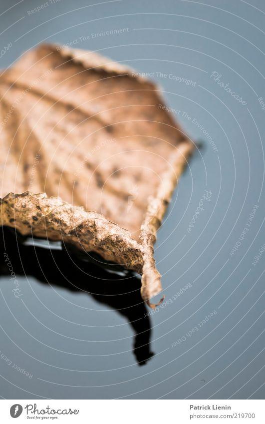 autumn days Umwelt Natur Urelemente Wasser Herbst Blatt Teich ästhetisch authentisch Flüssigkeit schön kalt nass Stimmung Sehnsucht trocken braun Farbfoto