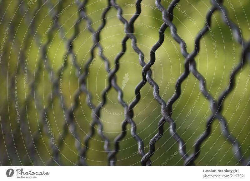 umschlossen Natur grün Sommer ruhig schwarz Metall glänzend Sicherheit einfach Schutz Metallwaren silber Barriere Schlaufe Maschendrahtzaun