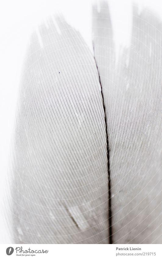 I like birds Natur schön weiß Luft Linie hell Umwelt ästhetisch weich Feder wild natürlich exotisch Makroaufnahme Faser Kiel