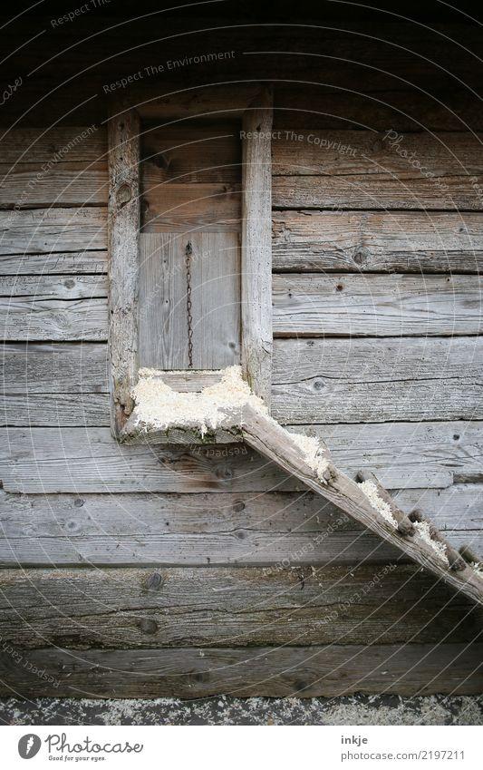 Hühnerleiter Holz braun Treppe einfach Hütte Holzhaus Stall Tierhaltung Hühnerstall