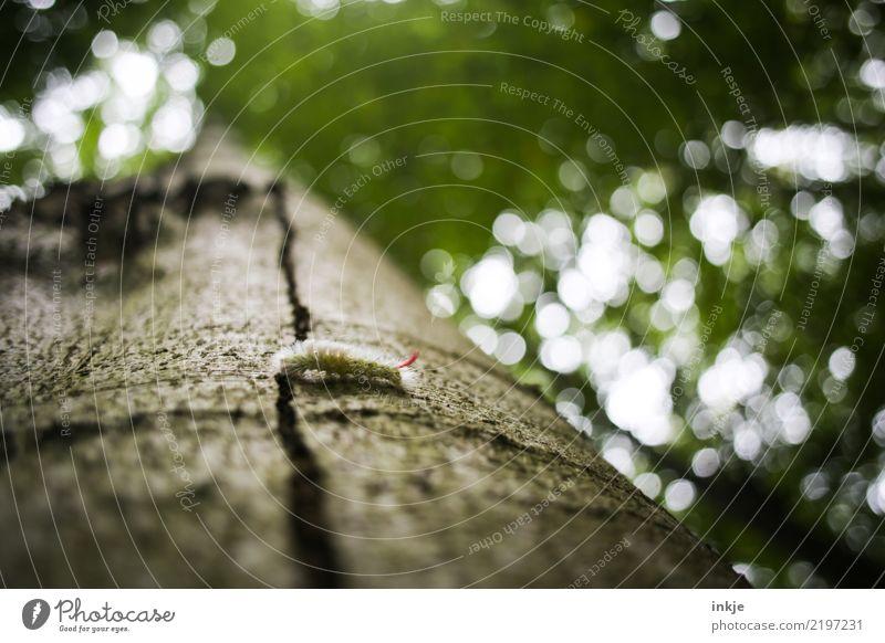 Raupe Natur Baumstamm Baumrinde Wald Wildtier 1 Tier klein Behaarung krabbeln Unschärfe grün Farbfoto Außenaufnahme Nahaufnahme Makroaufnahme Menschenleer Tag