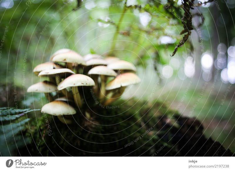 Pilzgruppe Natur Pflanze Sommer Tier Wald dunkel Herbst natürlich Menschengruppe Zusammensein Wachstum viele Moos Farn Waldboden zusammengehörig