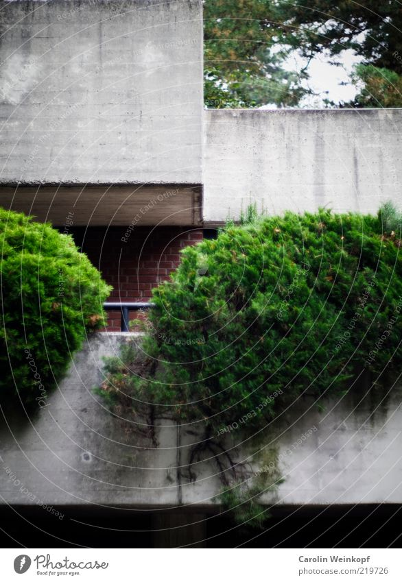Geometrie. grün Haus kalt Wand Architektur grau Stil Gebäude Mauer Fassade Beton Design ästhetisch Lifestyle Coolness