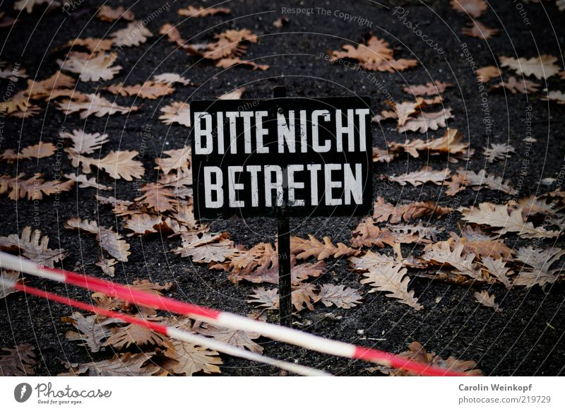 Bitte nicht betreten. Erde Herbst Blatt Park Menschenleer Wege & Pfade Zeichen Schilder & Markierungen Hinweisschild Warnschild Linie Streifen Kommunizieren