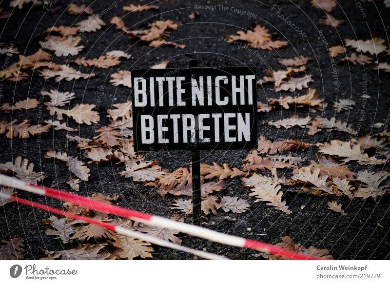 Bitte nicht betreten. weiß rot Blatt dunkel Herbst Wege & Pfade Park Linie braun Schilder & Markierungen Erde ästhetisch Kommunizieren Streifen Zeichen Hinweisschild