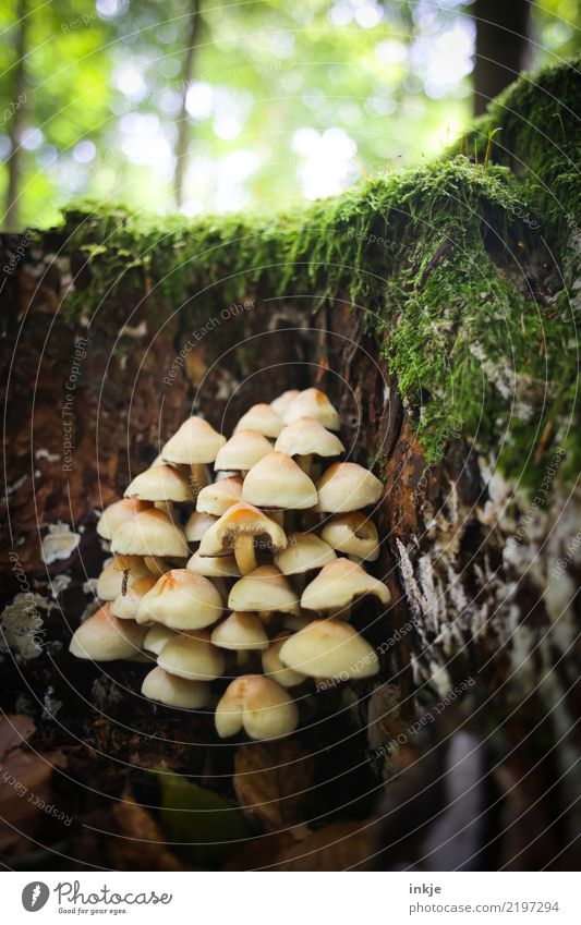 viele Pilze Natur Sommer Wald Herbst natürlich klein Zusammensein Wachstum mehrere Tiergruppe Zusammenhalt Moos Waldboden Symbiose
