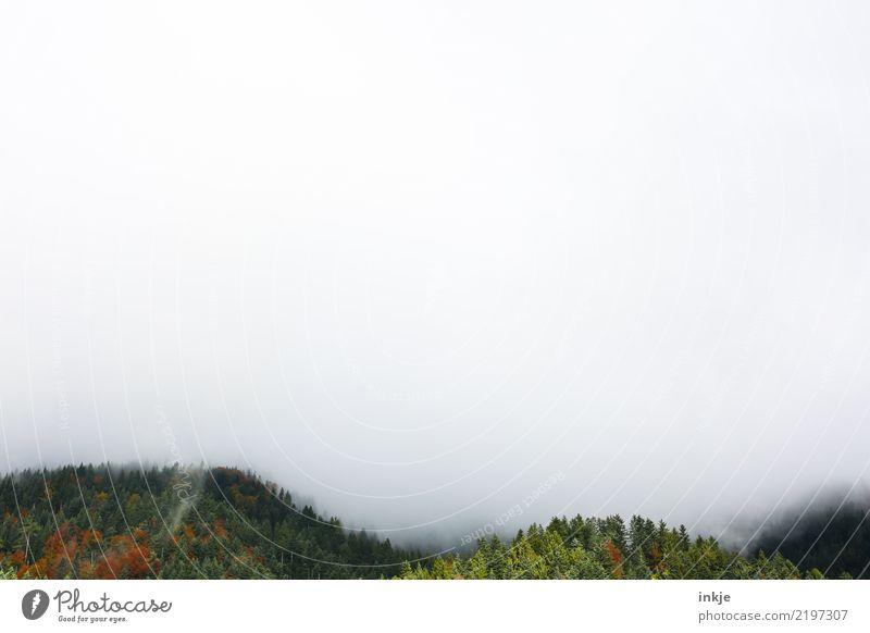 die Wälder von Nehböll Natur Sommer Landschaft Wald dunkel Berge u. Gebirge Umwelt Herbst Frühling Textfreiraum Nebel Aussicht Klima Alpen Dunst Klimawandel