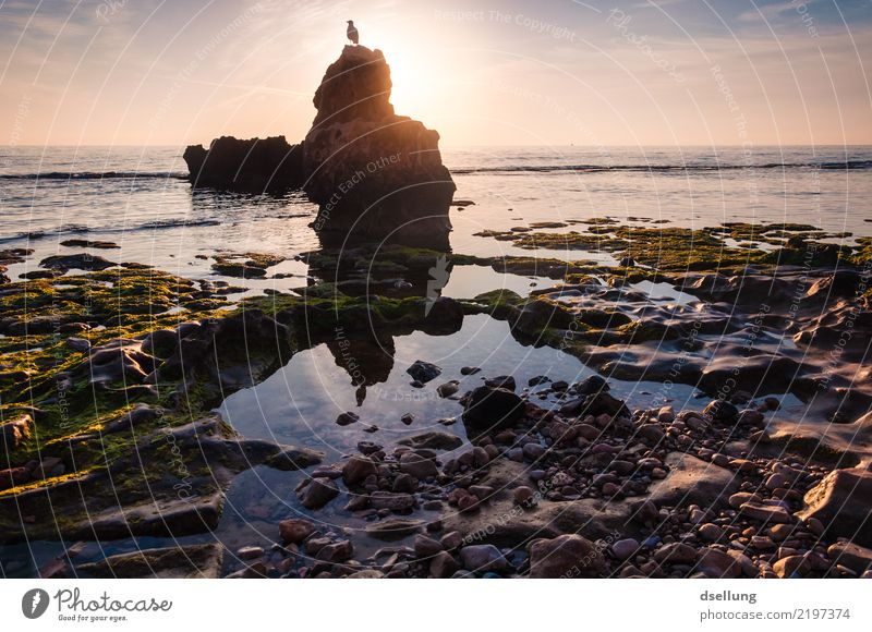 Der frühe Vogel wird fotografiert. Himmel Natur Ferien & Urlaub & Reisen Sommer Wasser Landschaft Meer Tier ruhig Ferne Strand kalt Frühling Küste Felsen