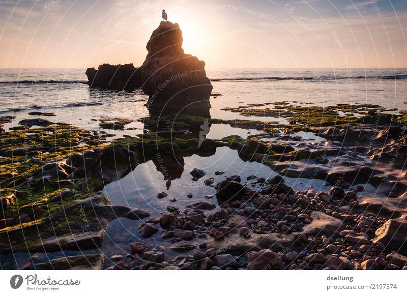 Sonnenaufgang am Ufer mit Vogel auf dem Fels im Vordergrund Ferien & Urlaub & Reisen Ferne Sommerurlaub Strand Meer Natur Landschaft Tier Erde Wasser Himmel