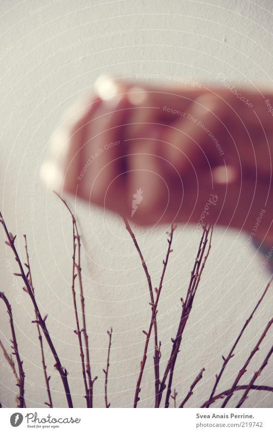ast. Hand schön Pflanze träumen Denken Arme elegant Umwelt Hoffnung authentisch Körperhaltung weich Blühend Leidenschaft Freundlichkeit Zweig