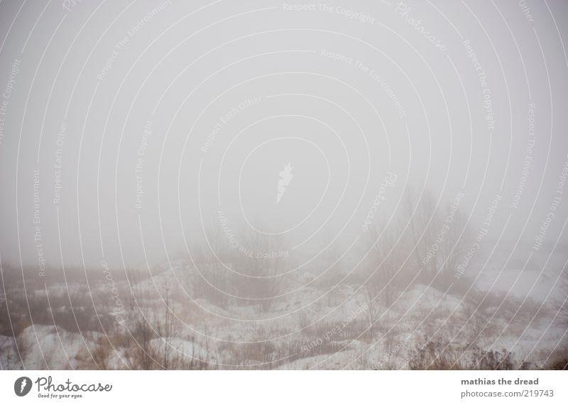 DÜSTERE ZEITEN STEHEN UNS BEVOR Umwelt Natur Landschaft Wolken Winter schlechtes Wetter Nebel Eis Frost Schnee Pflanze Gras Sträucher Wiese Feld dunkel hässlich